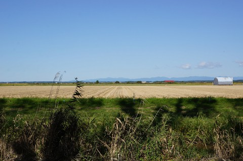 大潟の水田地帯